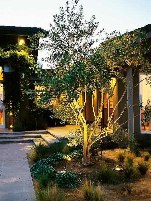 learn about landscape lighting design