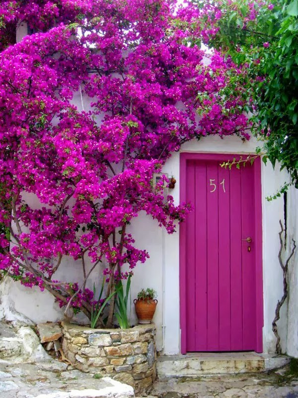 Matching front door and garden